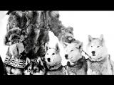 5 Самых трогательных и героических поступков животных