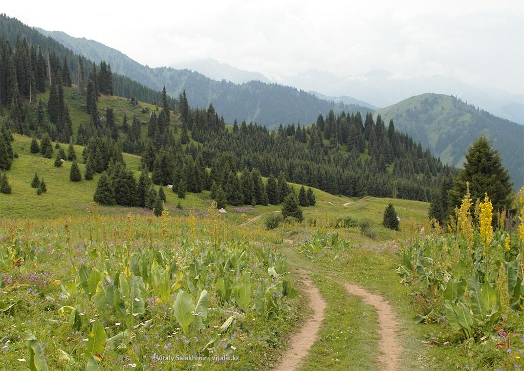 Спуск с Кок-Жайляу, внешний вид природы