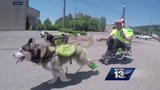 Homeless man on cross-country, urban dog sled journey makes stop in Alabama