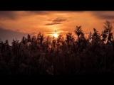 Applescal & Ryan Davis - Creatures (N'Pot Unofficial Remix)