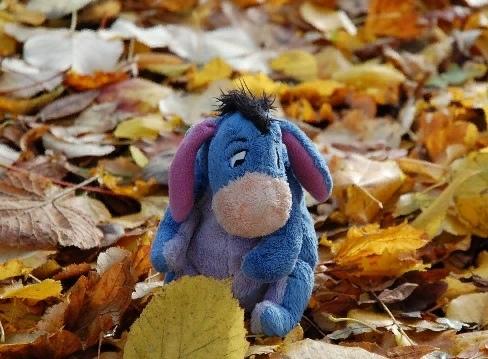 пожелтели листья грустно ну и пусть я порой осенней от депрессий прусь © вайшумайт