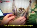 Вам кажутся милыми эти лемуры?