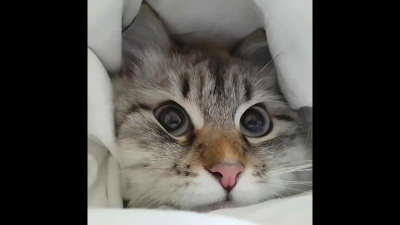 С ПРАЗДНИКОМ ДОРОГИЕ НАШИ ДЕВУШКИ !!! 🌹 Позови Кота с собой !!!  )))