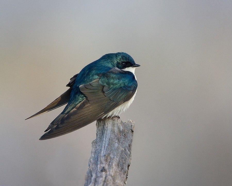 Международный день птиц отметят в библиотеке Ховрина