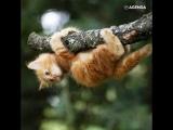 Котики-скалолазы
