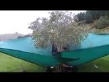 А вы когда-нибудь видели, как собирают оливки?