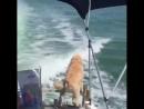 Дельфины дразнят собаку