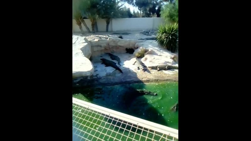 крокодай