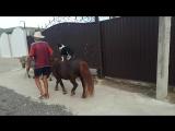 Старик Хоттабыч с осликом,пони и собакой
