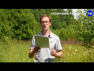 Планетарный конструктор Искусственная Луна (Познавательное ТВ, Артём Войтенков)