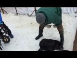 Навестили собак из приюта