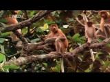 Самые странные в мире животные - На суше