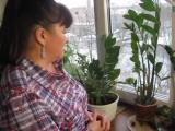 ЗАМИОКУЛЬКАС (долларовое дерево) - простые советы по уходу и размножению от Нелли Мурашкиной.