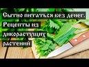 Сытно питаться без денег. Рецепты из дикорастущих растений