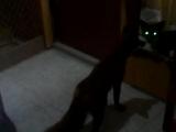 Страшный зверь-Кузя! ?? 1