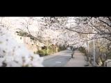 Cinematic Japan Sakura Drone Footage