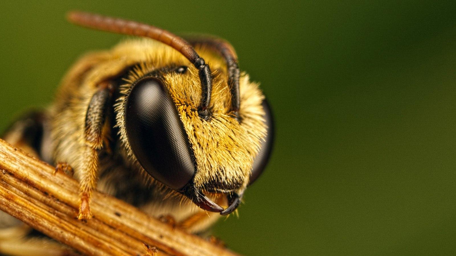 Где живут пчелы?
