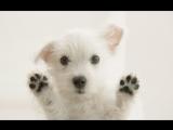 Корейская собака танцует под клубную музыку