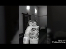 Video_20180224181220991_by_videoshow.mp4