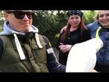 АВСТРАЛИЯ 2017. ЧАСТЬ 2. Селфи-тур Моргуновых. Команда КВН