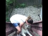 Собака не хочет идти домой!