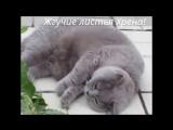 Смешные кошки приколы про кошек и котов 2017 #32 (Позитивные и очень красивые киски)