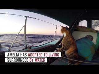 Amelia the sailor cat