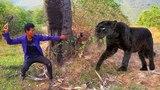 Wow! Brave Men Meeting Big Cat Black Panther - Most Spectacular Panther vs Human - Animal Attacks