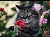 Как отучить кота мстить и гадить. ЛЕГКО и НЕОЖИДАННО