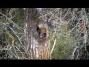 Полусонная медведица очаровала пользователей Сети