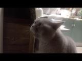 Кот очень смешно говорит: