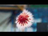 Фейерверк-шоу фруктами в Slow Motion