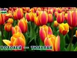 Какой ты Цветок по Знаку Зодиака Цветочный Гороскоп по Дате Рождения