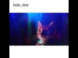 что сниться , моему коту