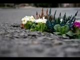 Сергей Беликов и ВИА Самоцветы Цветы на асфальте С Беликов В Дюнин запись 1982 год.