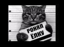 Приколы с котами и кошками — Смешные коты и кошки 2017 🐈 КОТЫ ПРИКОЛЫ 2017 1 котики приколы