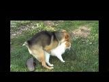 Лучшие спаривания собак с кошками  Смешные видео с животными  Приколы с кошками