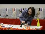 ALLBREED RING (AB-РИНГ) Экспертиза взрослых кошек Наталья Косарева (ICU) 21.10.2017