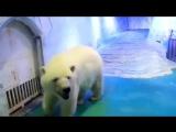 World's saddest polar bear