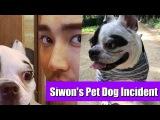 Super Junior Leeteuks Past Post About Being Bitten Regains Attention After Siwons Dog...