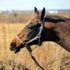 Конный клуб «Легенда» СПб Постой лошадей