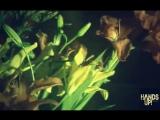 La Bouche - Sweet Dreams (Jeany Kiss Video Edit)