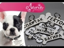 Оригинальный адресник с гравировкой для собак от Зоосалона ЛАПА