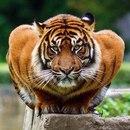 Личный фотоальбом Анжелики Лакеевой