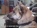 дразним собаку / говорящие животные звери собаки