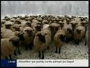 Pāces dzirnavās izgatavo dziju no aitu vilnas