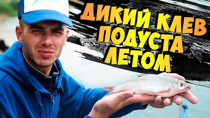 Рыбалка на фидер Бомбим ПОДУСТА и остальную белую рыбу летом в жару на Днепре