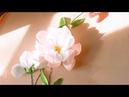166 Hướng dẫn thêu hoa cúc hồng trắng