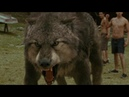 Клип про волков оборотней My Demons