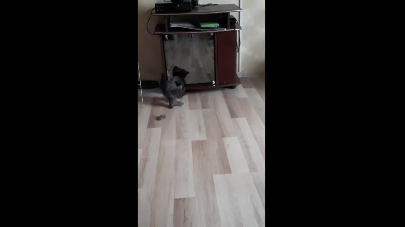мышка доя Шейди